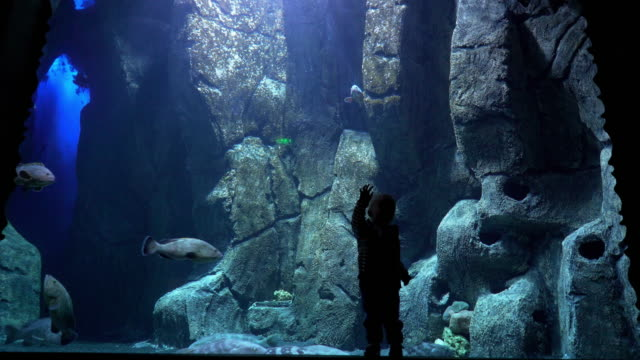 a boy in the aquarium center - sea life park stock videos & royalty-free footage