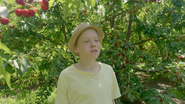 junge pflücken kirschen und essen sie im grünen kirschengarten am sommerlichen sonnigen tag. - 12 13 years stock-videos und b-roll-filmmaterial