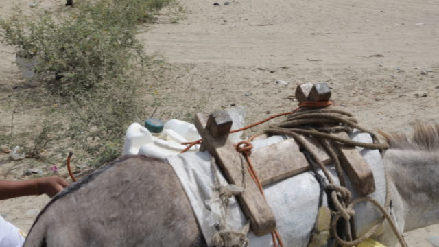 vidéos et rushes de a boy is walking a donkey who is used as an animal of work for water transportation on a banana plantation near piura peru a rickshaw is coming... - péruvien