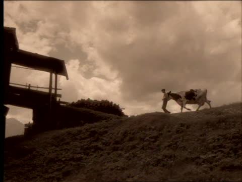 stockvideo's en b-roll-footage met sepia pan boy leading cow over hill towards barn - kleurtoon