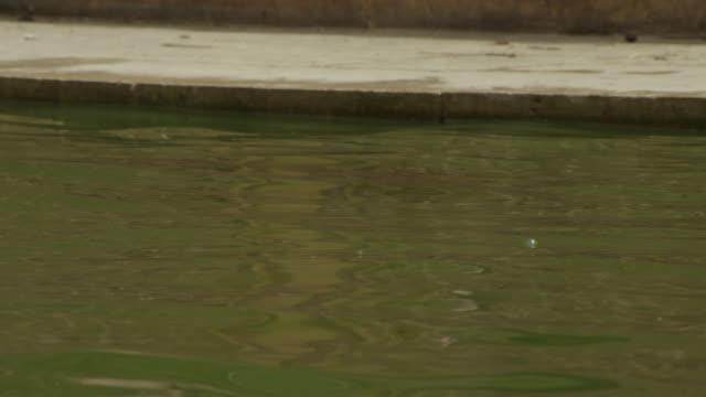 Boy leaps into pool at Galtaji temple, Jaipur, India