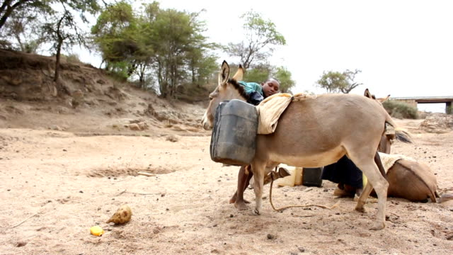 boy loading donkey with water gallons on august 02, 2011 in road from garisa to dadaab, kenya - アフリカの角点の映像素材/bロール