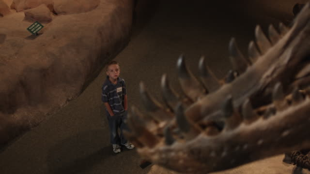 ms ha r/f boy (6-7) looking at dinosaur's skeleton in natural history museum, lehi, utah, usa - lehi stock videos & royalty-free footage