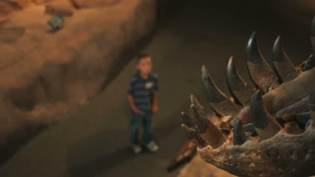 MS HA R/F Boy (6-7) looking at dinosaur's skeleton in natural history museum, Lehi, Utah, USA
