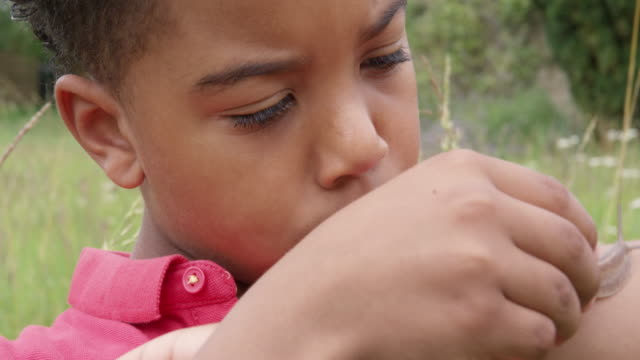 boy looking at snail - mollusc stock videos & royalty-free footage