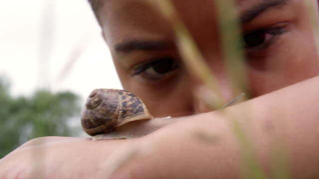 boy looking at snail - snail stock videos & royalty-free footage