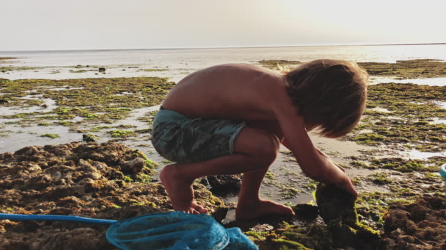 boy looking something under stone at beach - fishing net stock videos & royalty-free footage