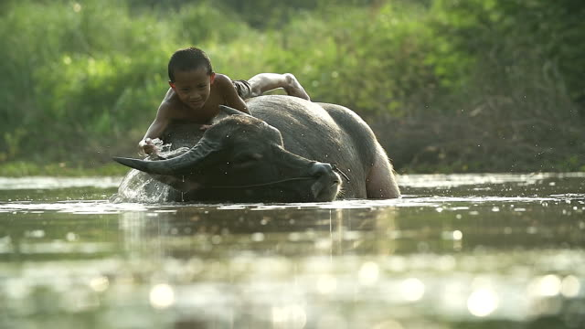a boy lying down on his buffalo.illustrate of a lifestyle of asian developing countries. - cambodia stock videos and b-roll footage