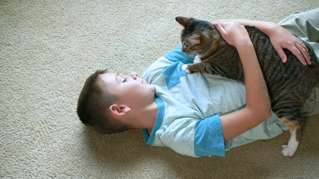 boy lying on floor petting and playing with cat - lying on back stock videos & royalty-free footage