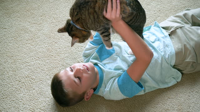 boy lying on floor playing with cat - lying on back stock videos & royalty-free footage
