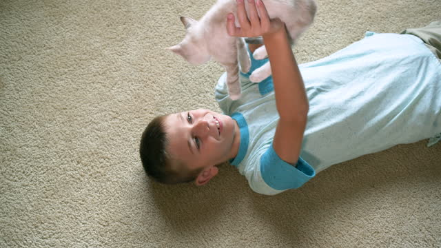 boy lying on floor playing with kitten - lying on back stock videos & royalty-free footage
