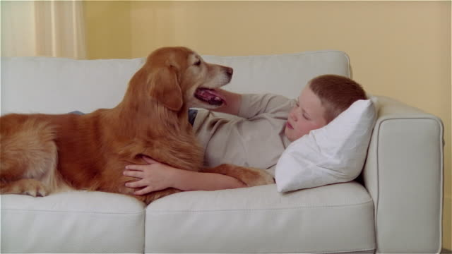 ms boy lying on sofa and petting golden retriever - stroking stock videos & royalty-free footage
