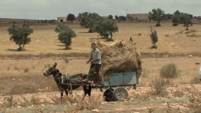 WS PAN Boy on cart loaded with hay drawn by donkey, Sidi Moktar, Morocco