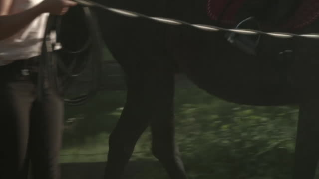 vídeos de stock, filmes e b-roll de boy on ranch learns how to ride a horse - young animal