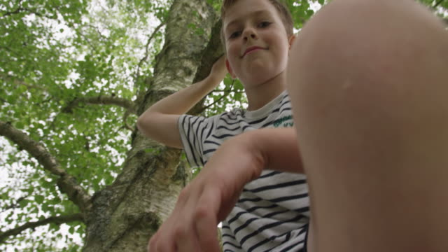 vídeos de stock, filmes e b-roll de boy on tree - low angle view
