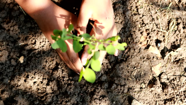 boy planting a new tree, concept save the earth, save the world, save planet, ecology concept - tree hugging stock videos & royalty-free footage