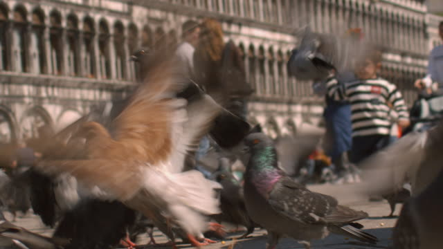 SLO MO, CU, Boy (2-3) playing with pigeons on Saint Mark's Square, Venice, Italy