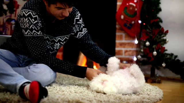 boy playing with the dog in front of the fireplace christmas - pampered dog stock videos and b-roll footage
