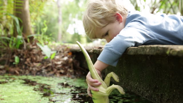 Boy playing with toy dinosaur laying on wooden bridge in woodland.