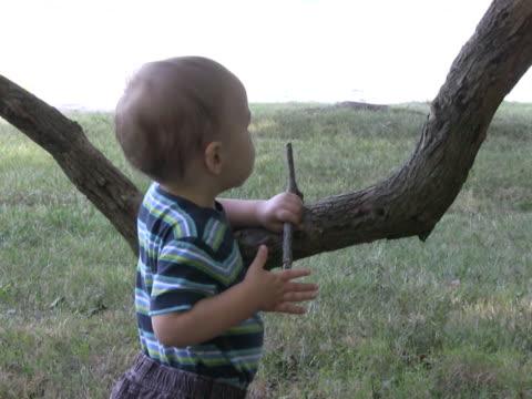 ragazzo gioca con bassa appeso ramo ntsc - solo bambini maschi video stock e b–roll