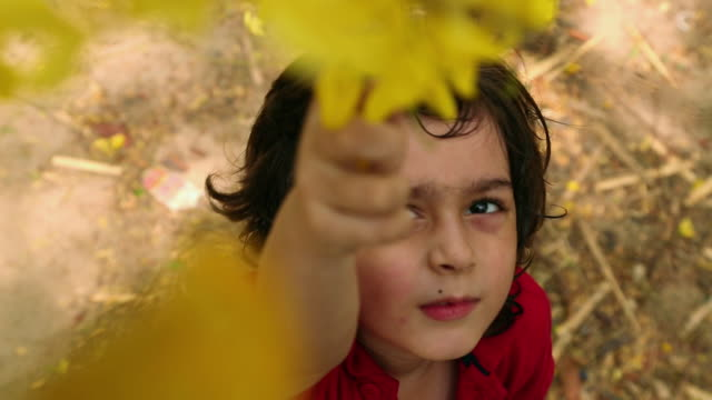 boy plucking flowers in the garden, delhi, india - removing stock videos & royalty-free footage