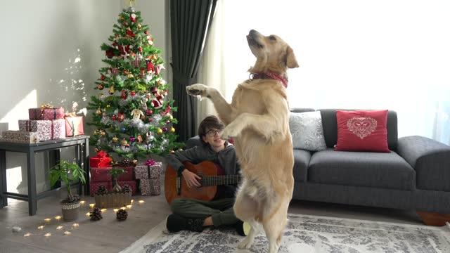 クリスマスに犬の隣で自宅でギターを練習している少年。 - ペット点の映像素材/bロール