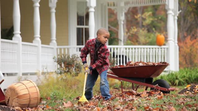 ws r/f boy (6-7) raking leaves in front yard of home / richmond, virginia, usa. - wheelbarrow stock videos and b-roll footage