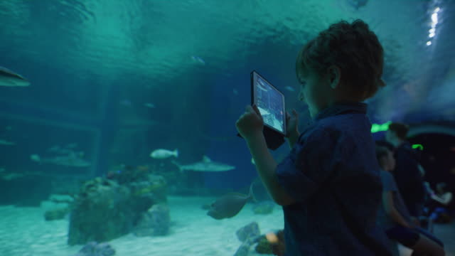 vídeos y material grabado en eventos de stock de boy recording sharks and fish swimming in aquarium using digital tablet / draper, utah, united states - curiosidad