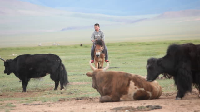 Boy riding horse and yaks standing
