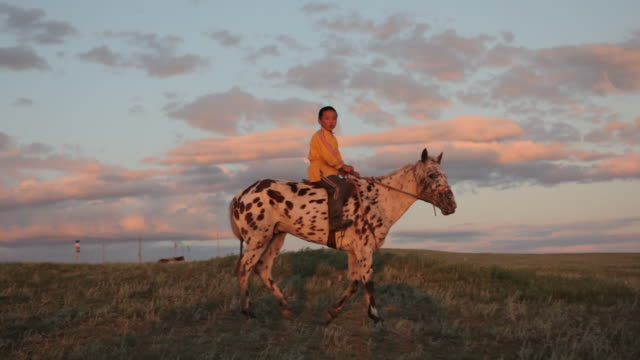 boy riding horse on open field - animale da lavoro video stock e b–roll