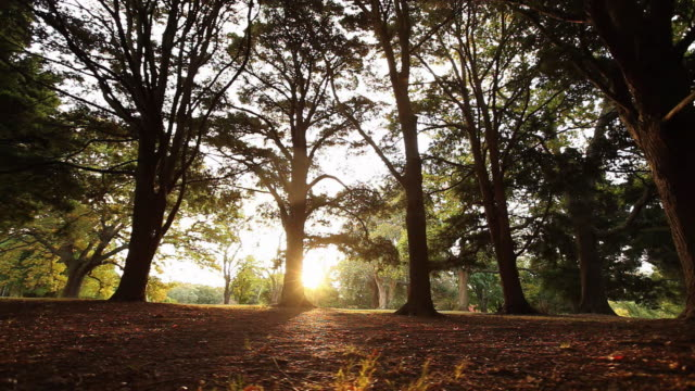 ws ds boy (4-5) running under trees by late afternoon sun / auckland, new zealand - boys stock videos & royalty-free footage