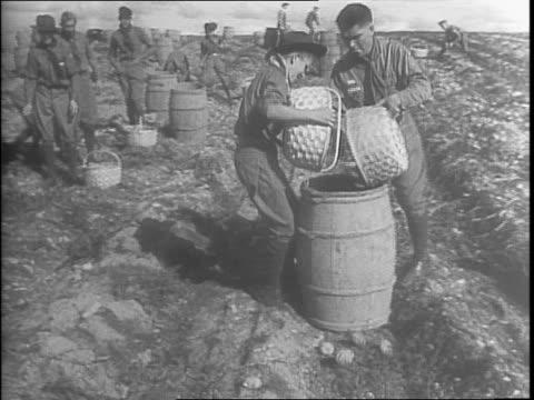 boy scouts walking down street carrying baskets / shot of farming machine digging up potatoes in the field / men on truck in field throw barrels off... - gesellschaftliche mobilisierung stock-videos und b-roll-filmmaterial