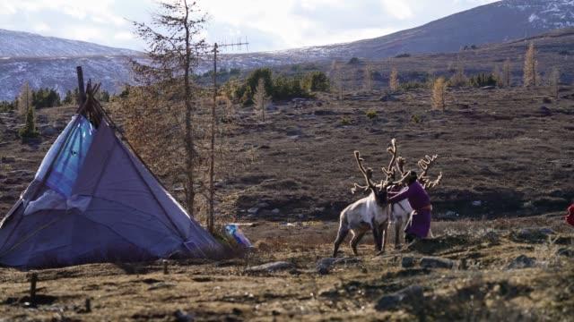 boy shepherding reindeers  in mongolia - minority groups stock videos & royalty-free footage