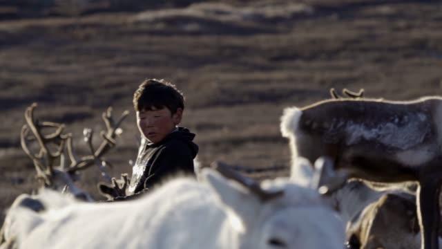 boy shepherding reindeers  in mongolia - independent mongolia stock videos & royalty-free footage