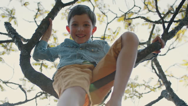 boy sitting in tree in grandparent's back yard - branch plant part stock videos & royalty-free footage