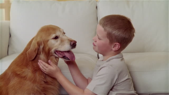 ms boy sitting on floor and petting and hugging golden retriever - stroking stock videos & royalty-free footage