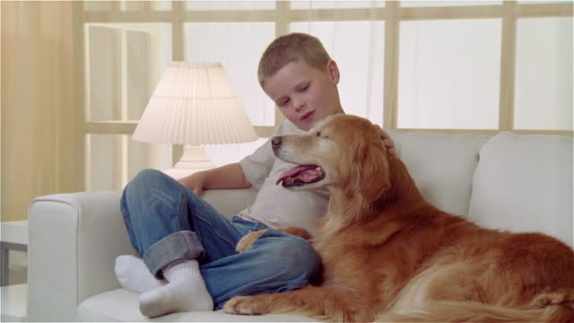 ms boy sitting on sofa and petting golden retriever - stroking stock videos & royalty-free footage