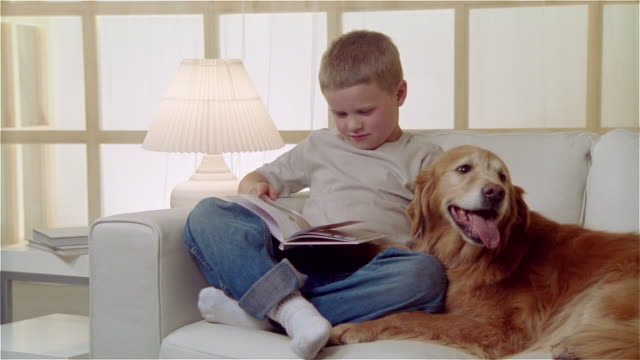 ms boy sitting on sofa with golden retriever and reading book - pampered pets stock videos and b-roll footage