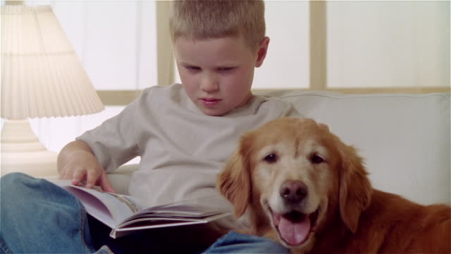ms zi boy sitting on sofa with golden retriever and reading book - pampered pets stock videos and b-roll footage