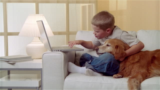 ms boy sitting on sofa with golden retriever and using laptop - child sitting cross legged stock videos & royalty-free footage