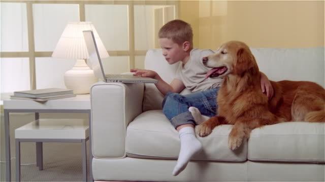 vídeos de stock, filmes e b-roll de ms boy sitting on sofa with golden retriever and using laptop - bichos mimados