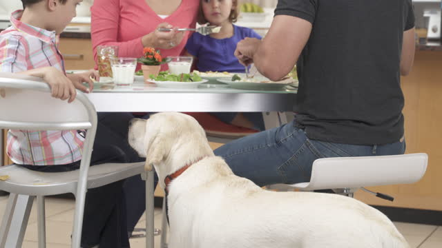 vídeos y material grabado en eventos de stock de boy sneaking his food to dog during dinner - animal family