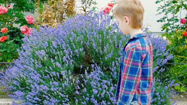 boy sneezing from pollen of flowering plants