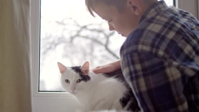 boy strokes cute sleeping cat at windowsill - stroking stock videos & royalty-free footage
