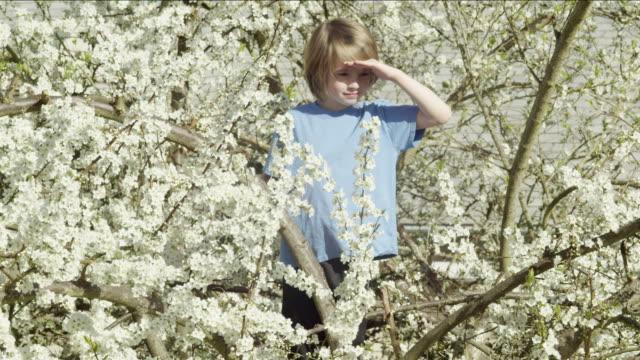 Boy surveys from a tree branch