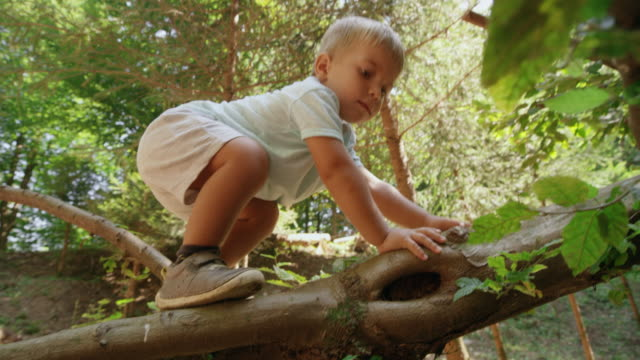 boy toddler climbing up a fallen tree trunk in the sunny forest - climbing stock videos & royalty-free footage