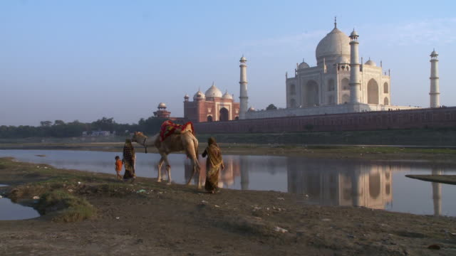 vídeos de stock, filmes e b-roll de boy, two ladies and a camel walk past taj mahal - animal de trabalho