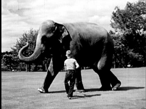 vídeos de stock e filmes b-roll de b/w ws 1940 boy (11-12) walking alongside elephant tapping behind its front legs with cane / usa - circo