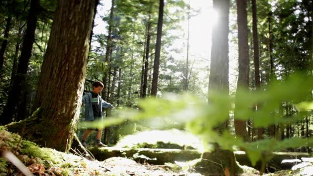 vídeos de stock, filmes e b-roll de ws boy (8-9) walking on log in squamish alice lake park / squamish, british columbia, canada - tronco termo anatômico