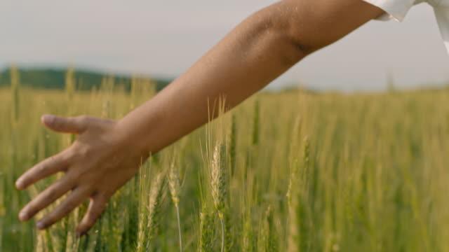 vídeos y material grabado en eventos de stock de muchacho de cu caminando, tocando el trigo verde en campo idílico, rural - percepción sensorial